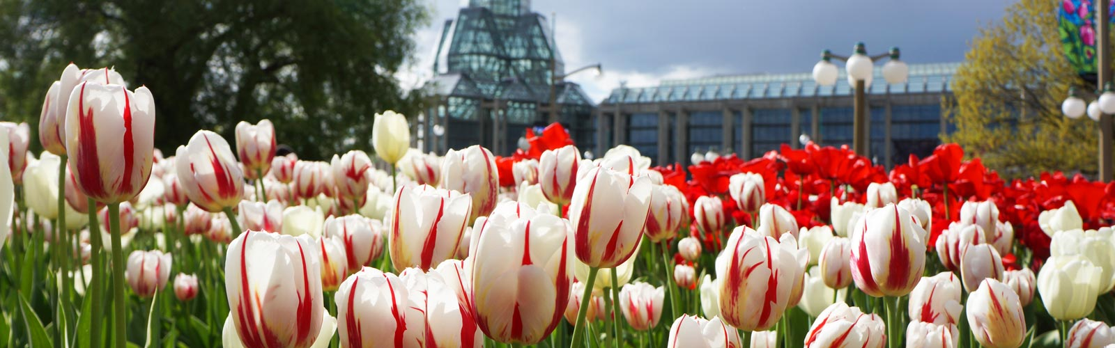 Botanical Celebration of Canada's 150th Birthday