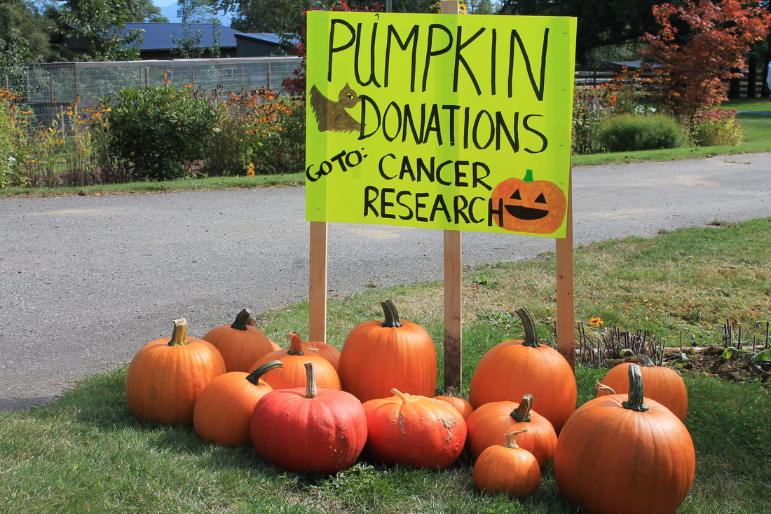 Marsh McCormick Pumpkin Sale