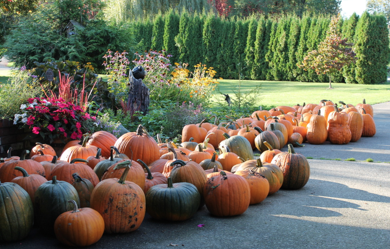 Pumpkin sale for charity